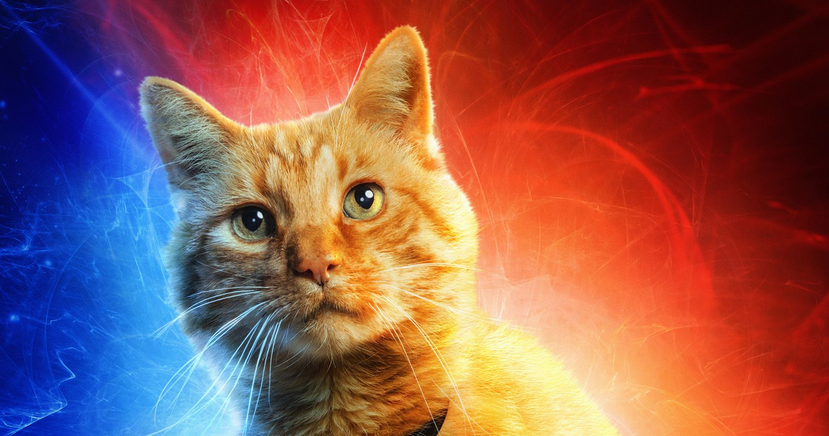 Goose Captain Marvel S Cat Is Adorable But What Else Is