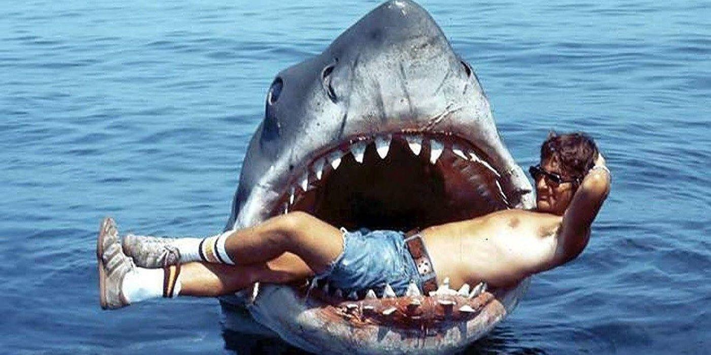 Weißer Hai Baby